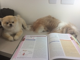 Estudando com meus companheiros em casa!